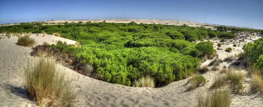Parque Nacional de Donaña