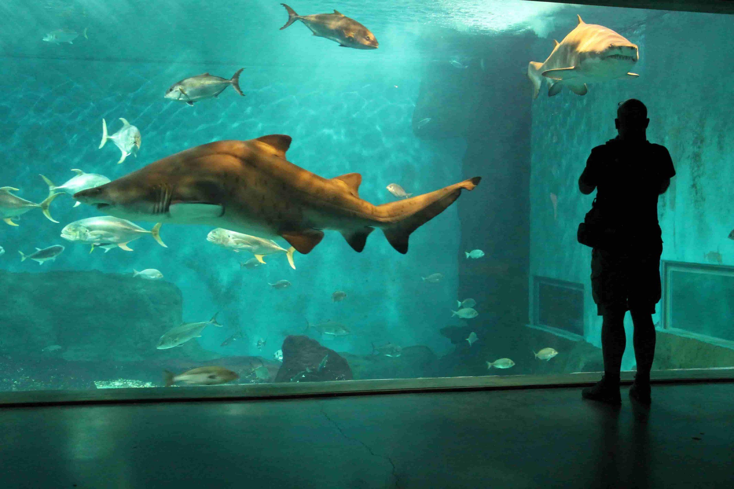 Sevilla Aquarium